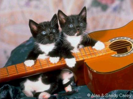 chatons-guitare